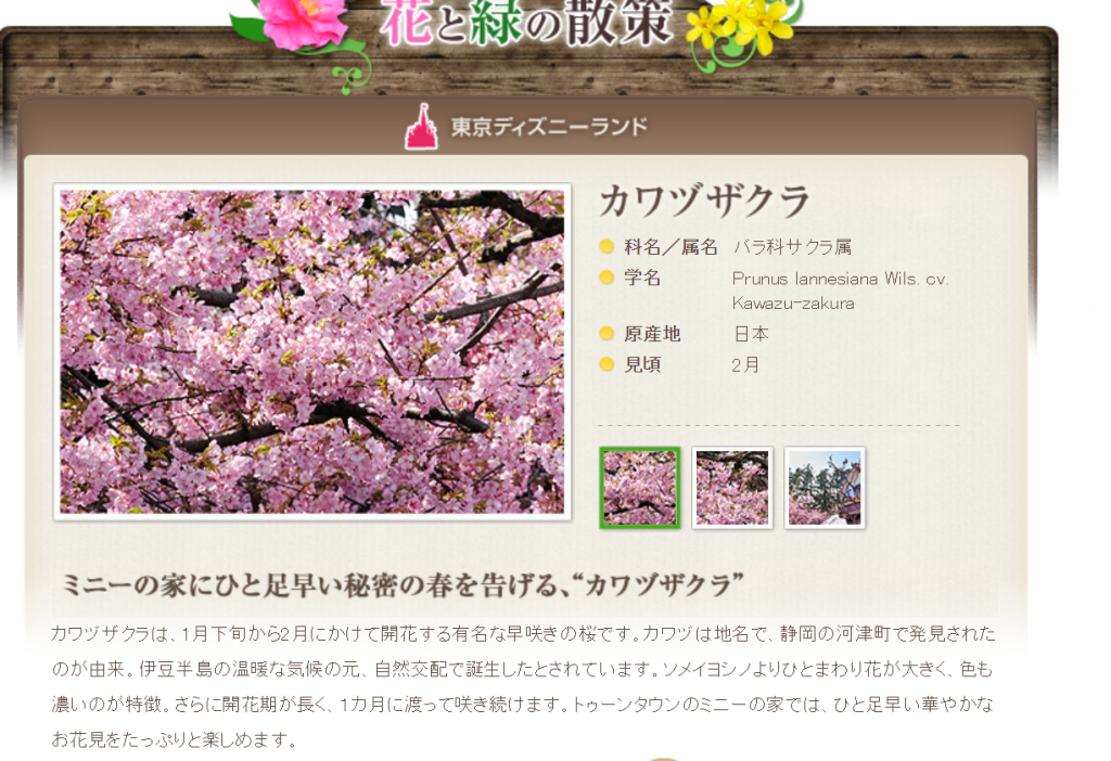 東京ディズニーリゾートでもお花見ができるって知ってた?パーク内で桜が見られるスポットや、お花見にオススメなグッズ・メニューをご紹介!